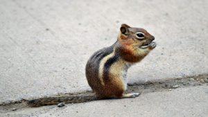 An invader in Kuma's yard
