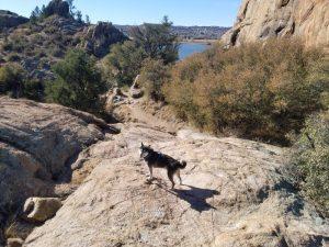 Kuma loves bouldering