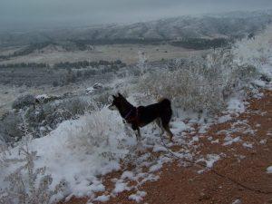 Kuma on the Horsetooth Mtn trail