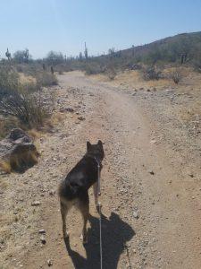 Kuma ready for a new trail