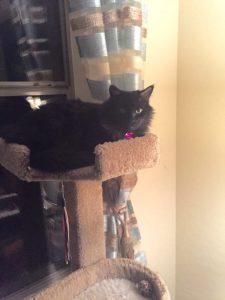 Edmond on top of world