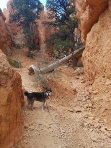 Kuma hikes red canyon