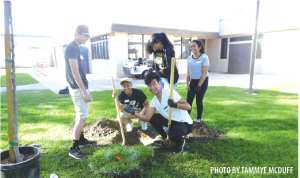 Local Key Club volunteers find buried treasure from the 1980's while planting trees at Simms Park.