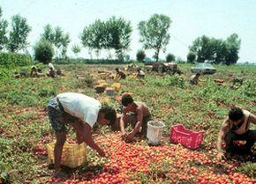 lavoro sui campi