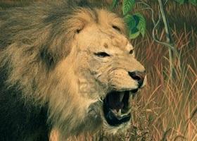 leone-coraggio