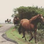 Trekking equestre all'Abbazia di Vezzolano
