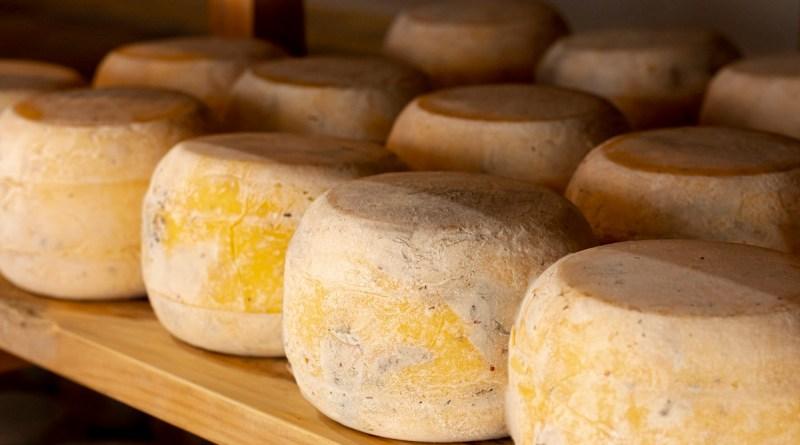 Torino Cheese