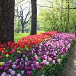 Da Pralormo a Trieste, fiere di primavera dedicate ai fiori