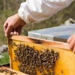 Marentino, riflettori puntati sulla Fiera Regionale del Miele