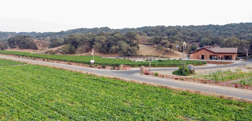 Zaca Mesa winery on Foxen Canyon near Los Olivos, CA