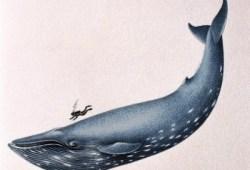 buzo nadando con una ballena azul