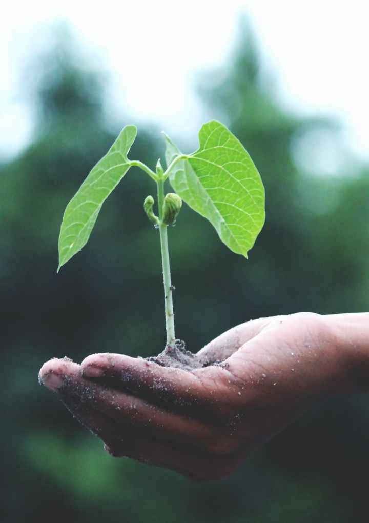 Comunión universal: ecologismo.