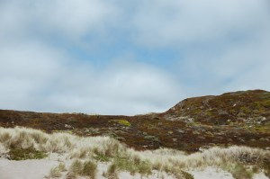 Point Reyes California – A Mini Guide