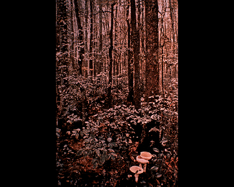 046 - Forest scene with mushrooms, Bruce Dale