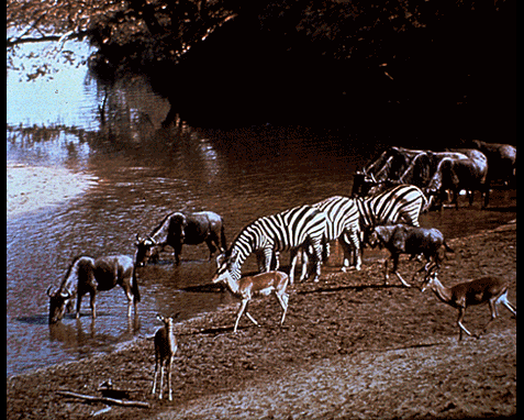 059 - Waterhole, South African Tourist Corp