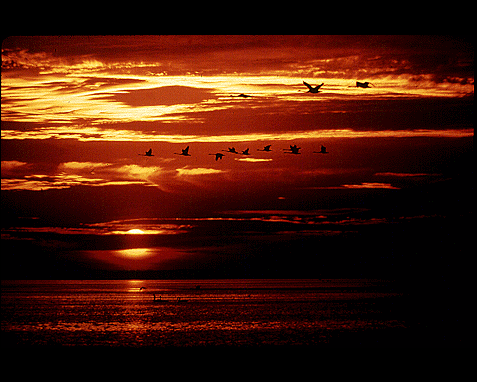 114 - Sunset with birds, David Harvey
