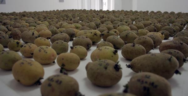 Eric van der Kooij Potato, Potatho, Tomato, Tomatho