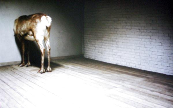 Ruben Bellinkx - The Trophy - 16mm film overgezet naar blu-raydisc, loop, 2 projecties