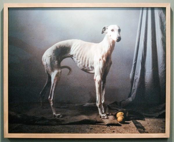 Flatland Gallery - Martin Usborne