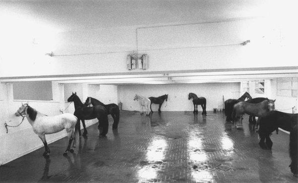 1969 - Jannis Kounellis - Untitled (12 Horses)