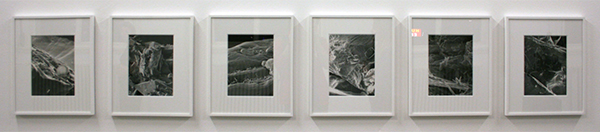Anye Galleccio - Plain as your eyes can see - Archival pigmentinktjet prints op katoenvezel papier