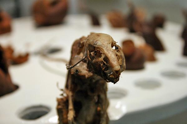 Christiaan Zwanikken - Seeds Make My Day - 65x49x45cm - Ratskelet, hout, zaden, paardenhaar, motoren en electronica