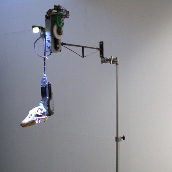 Christiaan Zwanikken - Salto Mortale - 14x48x80cm Ganzenschedel staal, licht, kenetica en microcomputer