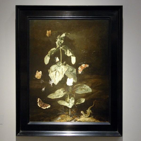 David Koetser Gallery - Otto Marseus van Schrieck