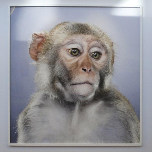 Jaski Gallery - Jill Greenberg