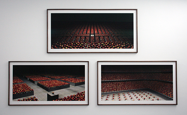 Koen Theys - Still Life with Apples I, II & III - 100x183cm Prints