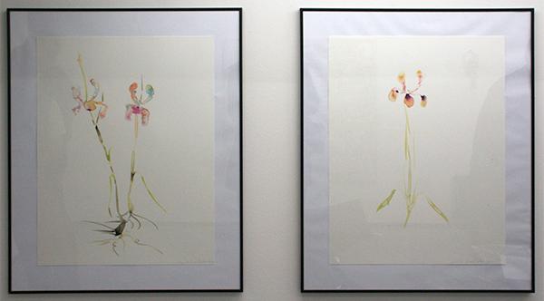 Marc Mulders - Aquarellen - 65x50cm Aquarel op papier