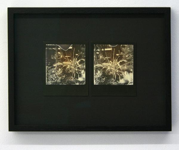 Navid Nuur - Hivewise - 24x32cm Twee polaroids