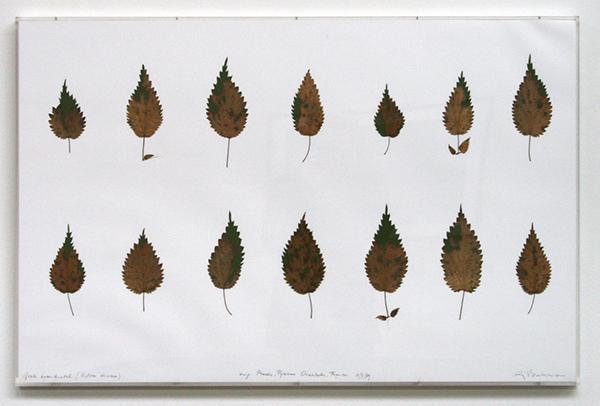 Sjoerd Buisman - Bladreconstructie, Grote brandnetel (Urtica diocea) - 65x1000cm Herbarium en gouache op papier