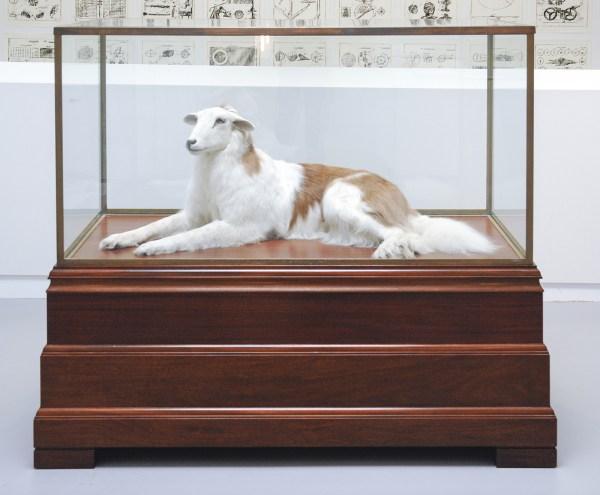 Thomas Grunfeld - Misfit (Sint Bernhard , Sheep) - Taxidermie en vitrine