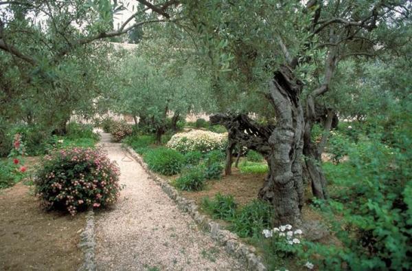 Tuin van Gethsemane