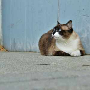 Calico Cat With Interesting Gps >> About Lost Cat Advice