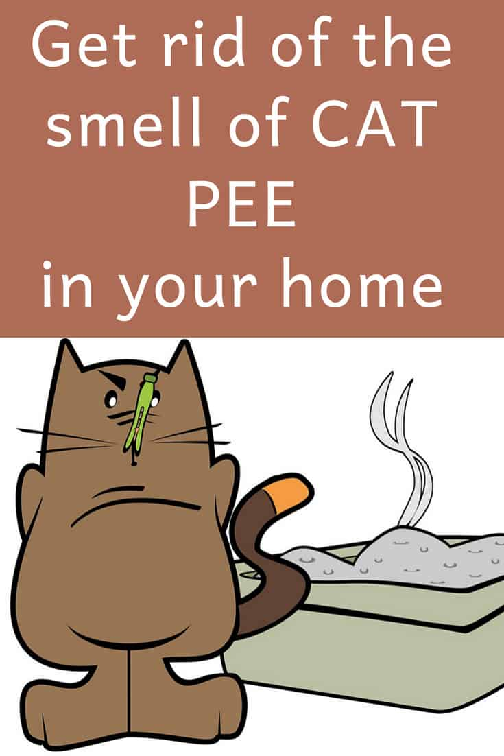 If Your Whole House Smells Like Cat Urine - Try This! | Lost