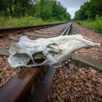 Chernobyl-53.jpg