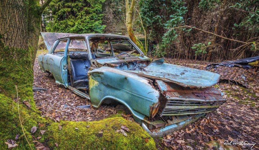 Lost-in-the-Woods-8.jpg
