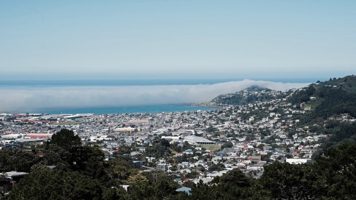 Wellington on a sunny day. Walk up mount vic