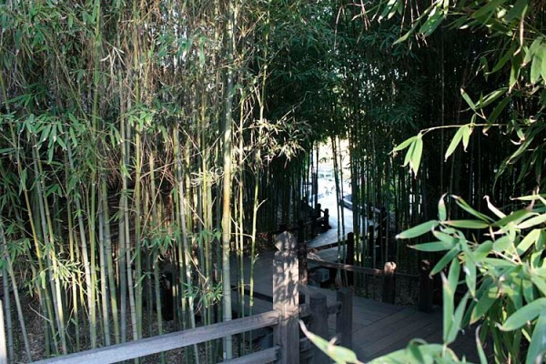 japanese gardens with bamboo the huntington's japanese garden | [ Lost in the Landscape ]