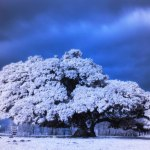 Infrared photography tips: how to best use a filter