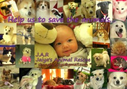 Jaiya surrounded by animals that have been rescued in her name.