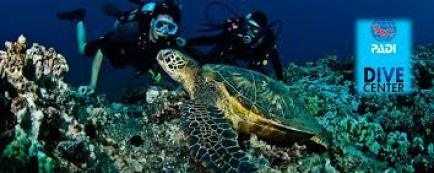 images - Key West Diving Trips