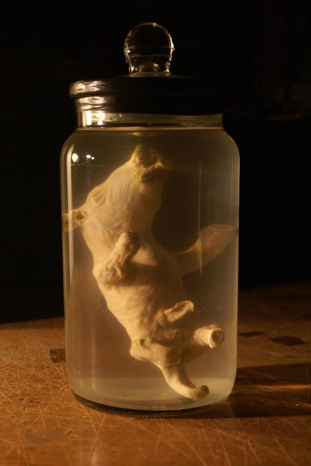 thylacine-puggle-3
