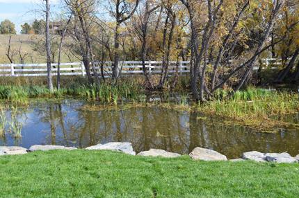 natural pond with improved boulder edge