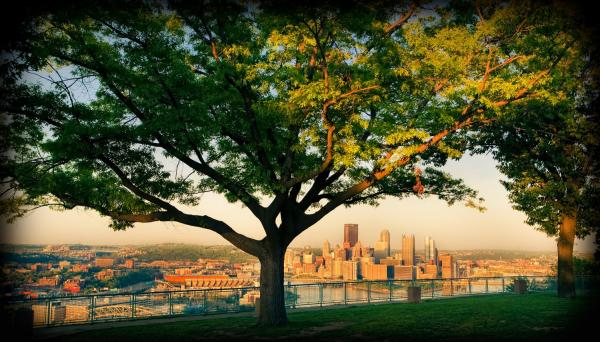 Tree on hill overlooking Pittsburgh