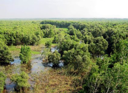tra su forest an giang