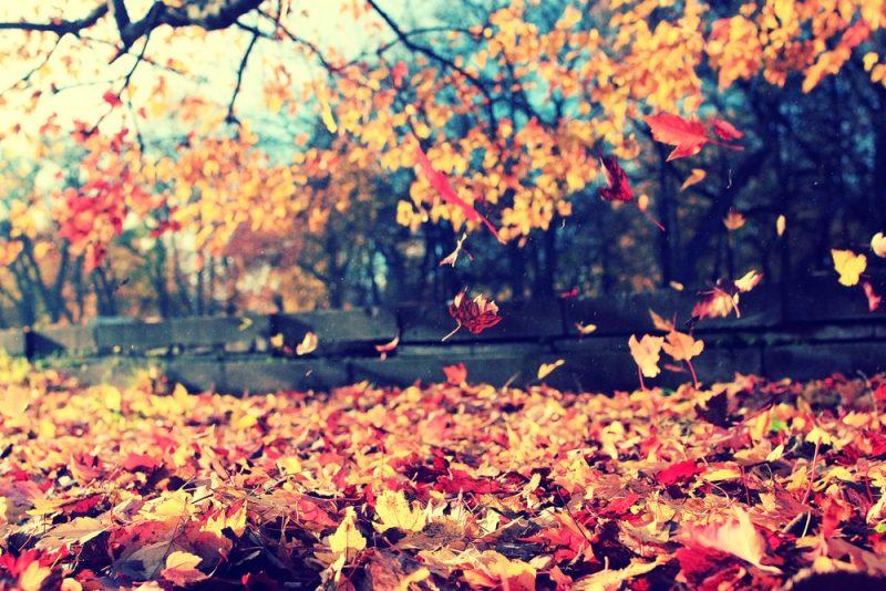 zo bedenk je spannende herfstspeurtocht tieners