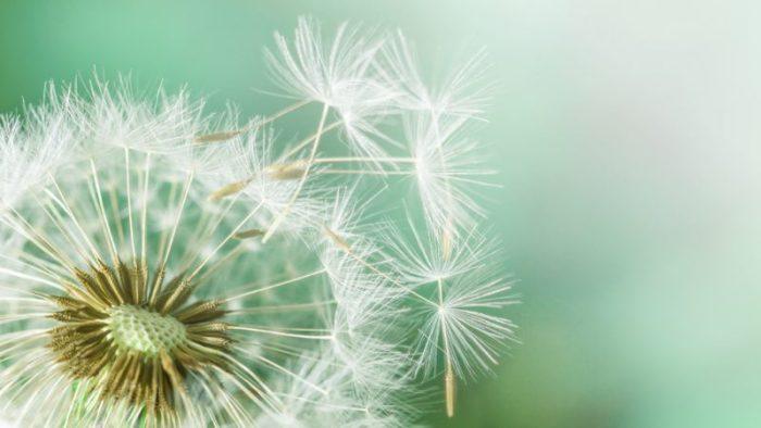 hooikoorts pollenallergie stuifmeel medicatie